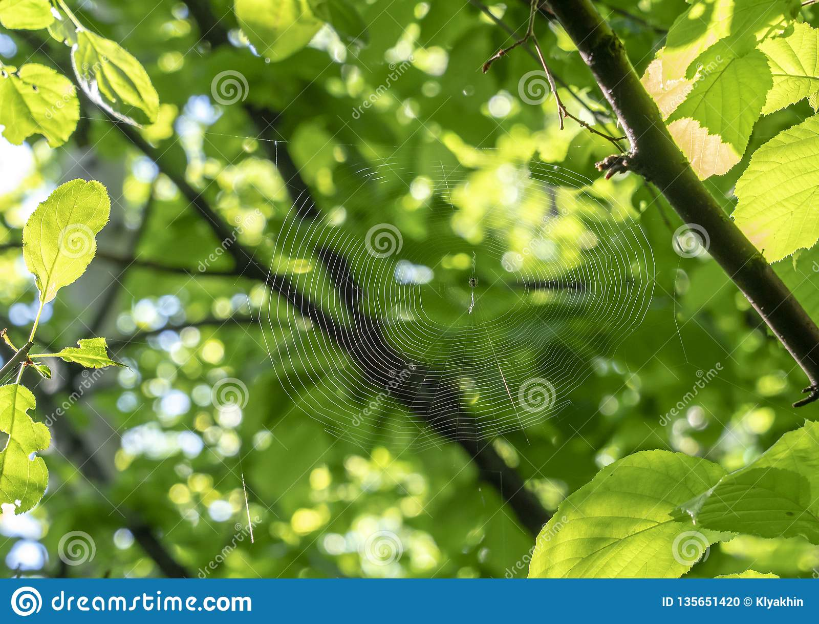 Web de aranha no close-up da floresta da mola