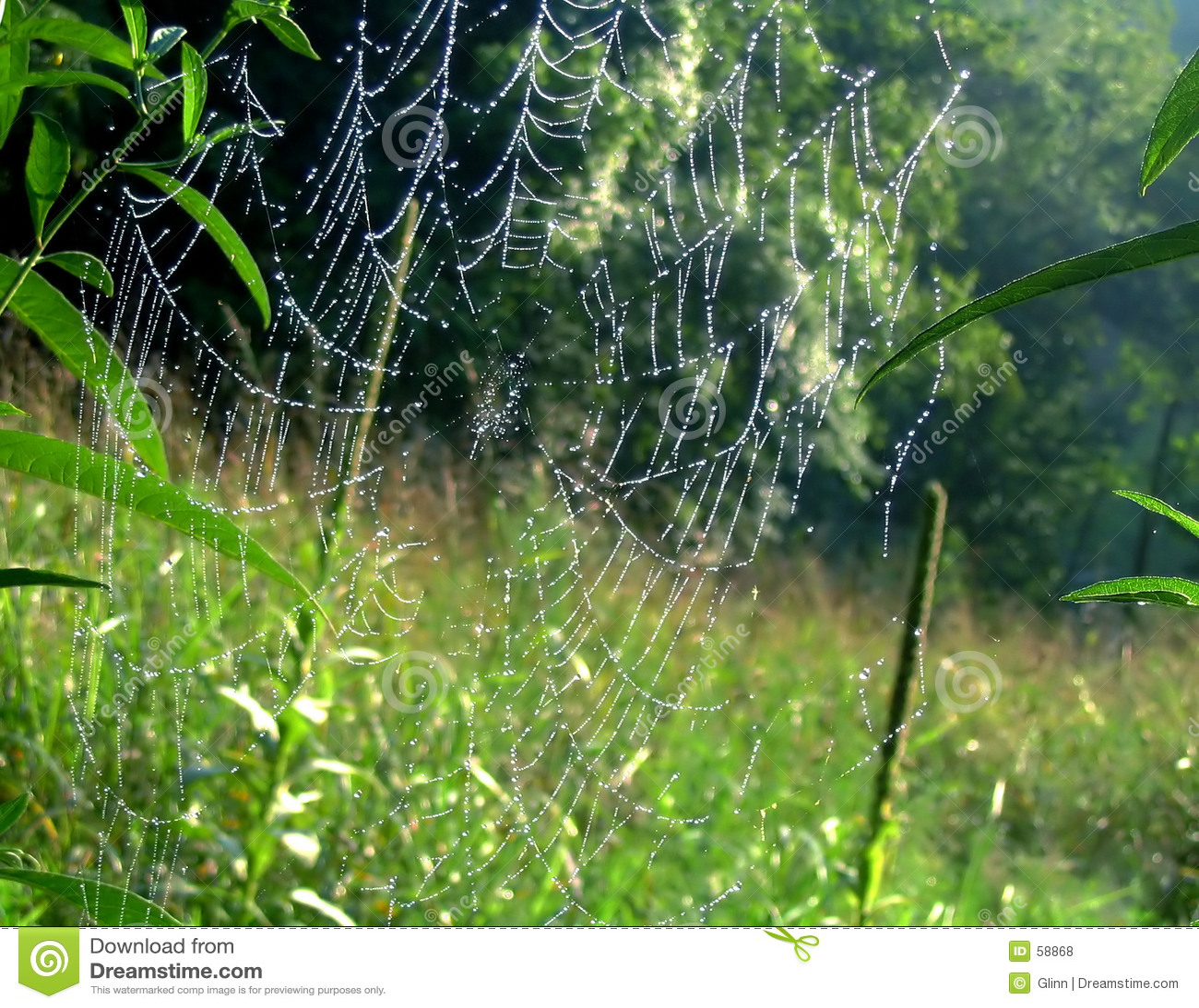 Web del ragno