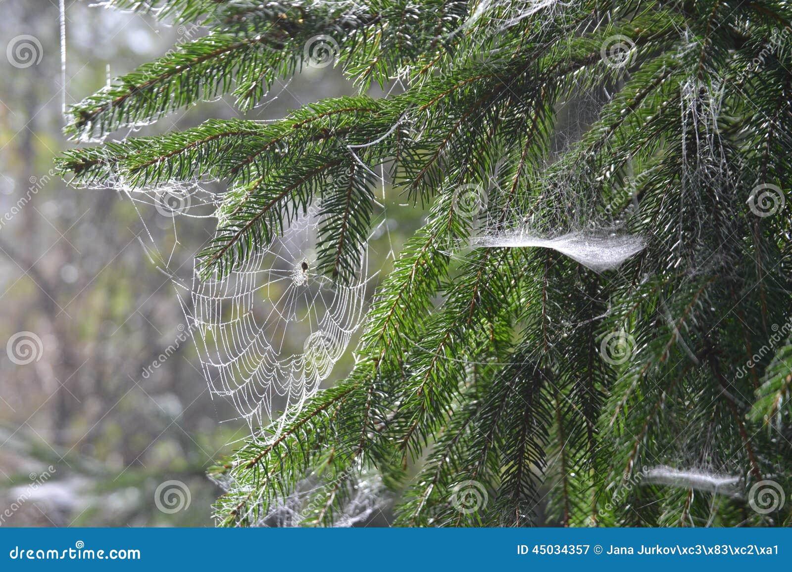 Web, detail