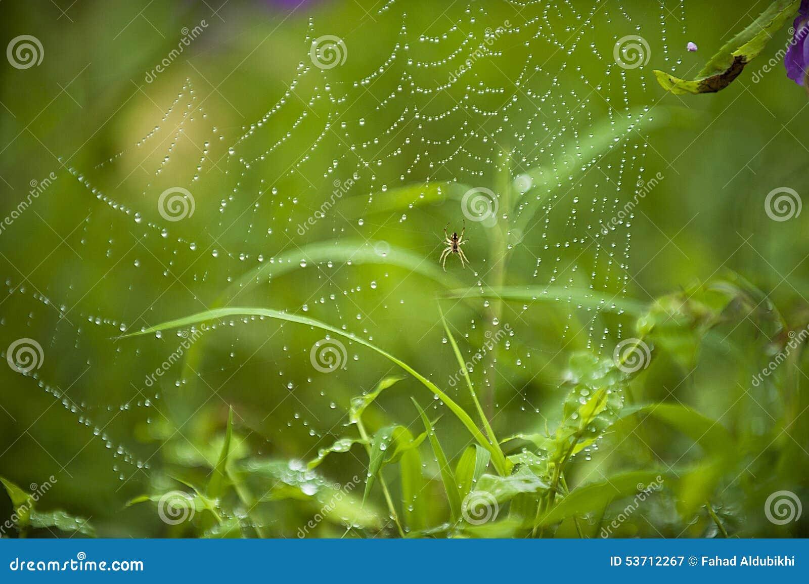 Web di ragno