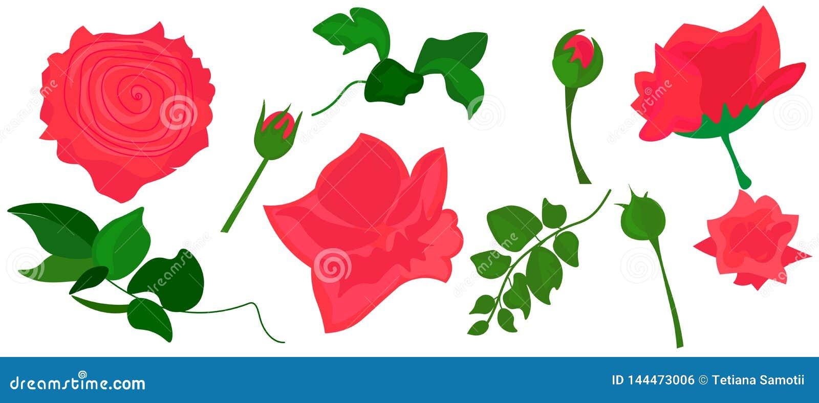 Web Het realistische beeld van Art Pink Flower van de Rozen Vectorklem