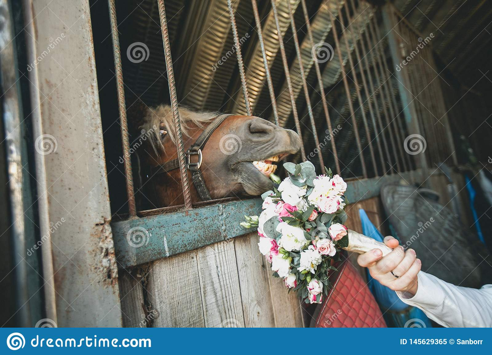Wedding bouquet of different flowers and green leaves in the hand of the groom and the muzzle of the horse stretches