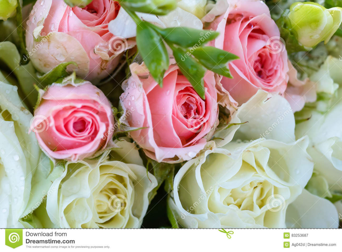 Wedding Bouquet Of White And Pink Roses Drops On Flowers Flora