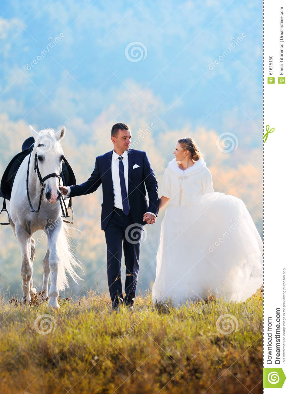 558 Wedding Bride Groom White Horse Photos Free Royalty Free Stock Photos From Dreamstime