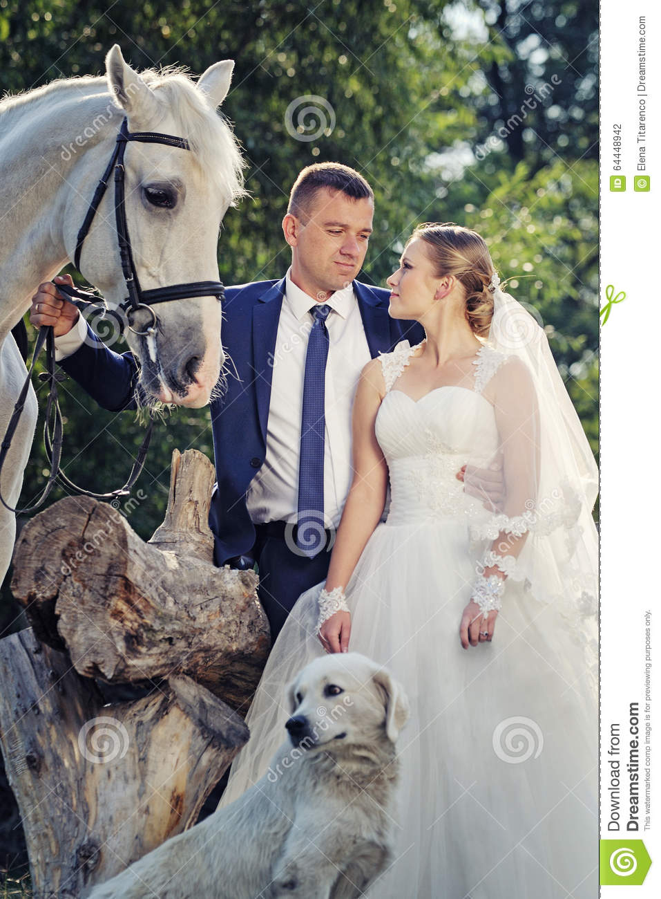 Wedding Bride And Groom With White Horse Stock Photo Image Of Dress Kiss 64448942