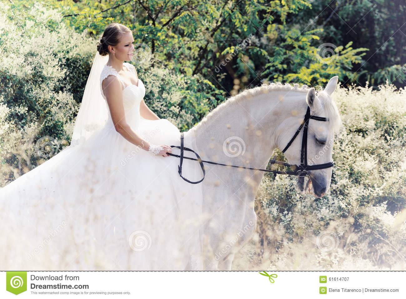 Wedding Bride With White Horse Stock Image Image Of Ceremony Forest 61614707
