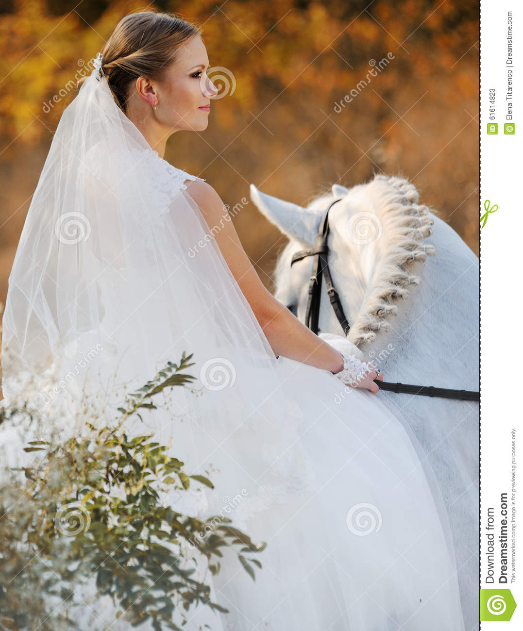 Wedding Bride With White Horse Stock Image Image Of Dream Happiness 61614823
