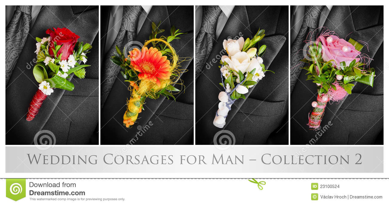 wedding corsages for man stock images  image, Natural flower