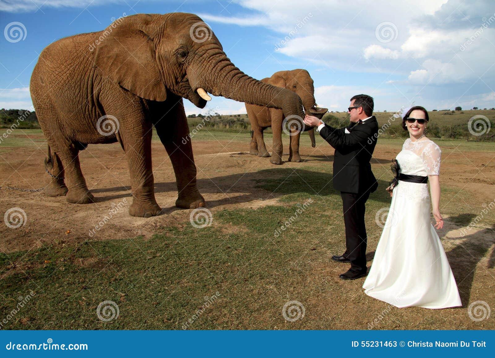 Wedding Couple And African Elephant Shoot Stock Photo ...