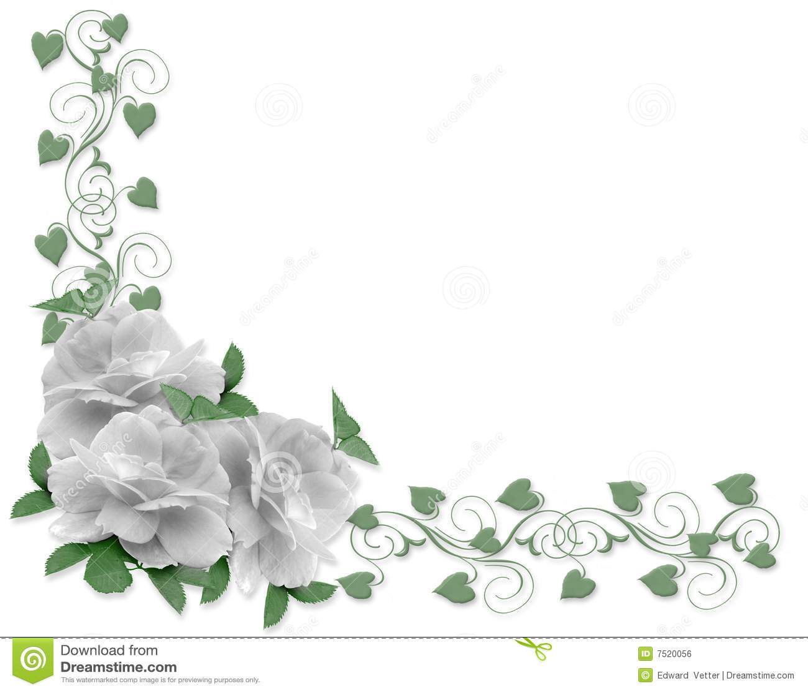 Wedding Invitation Border White Roses Stock Illustration ...