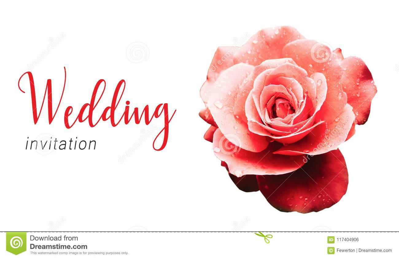 Wedding Invitation Text Card Template And Red Pink Rose Flower After ...