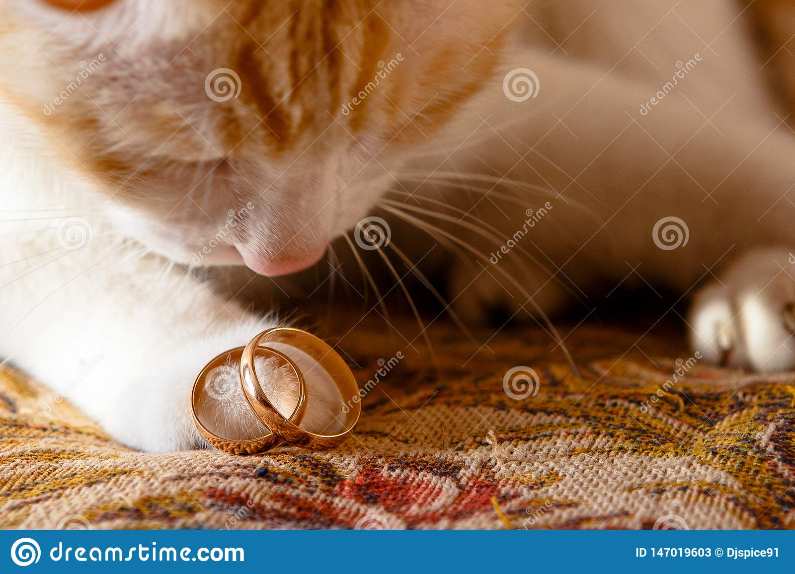 Wedding rings on the cat`s foot