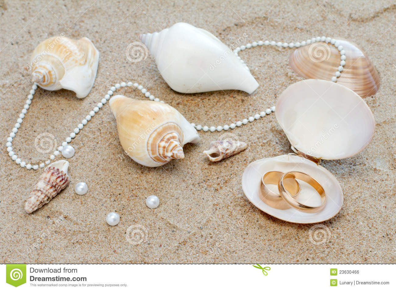 Wedding rings in cockleshell on sand