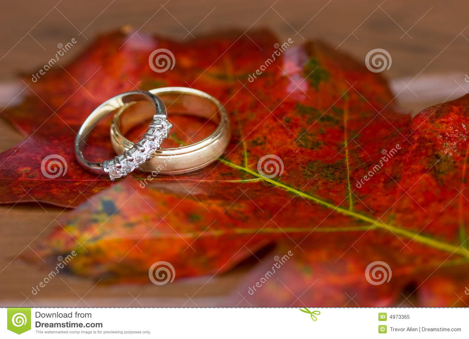 Wedding Rings in the Fall