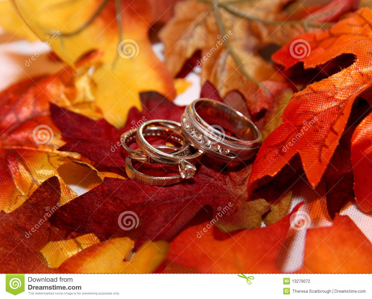 Wedding Rings On Fall Leaves Stock Photo Image 13279072