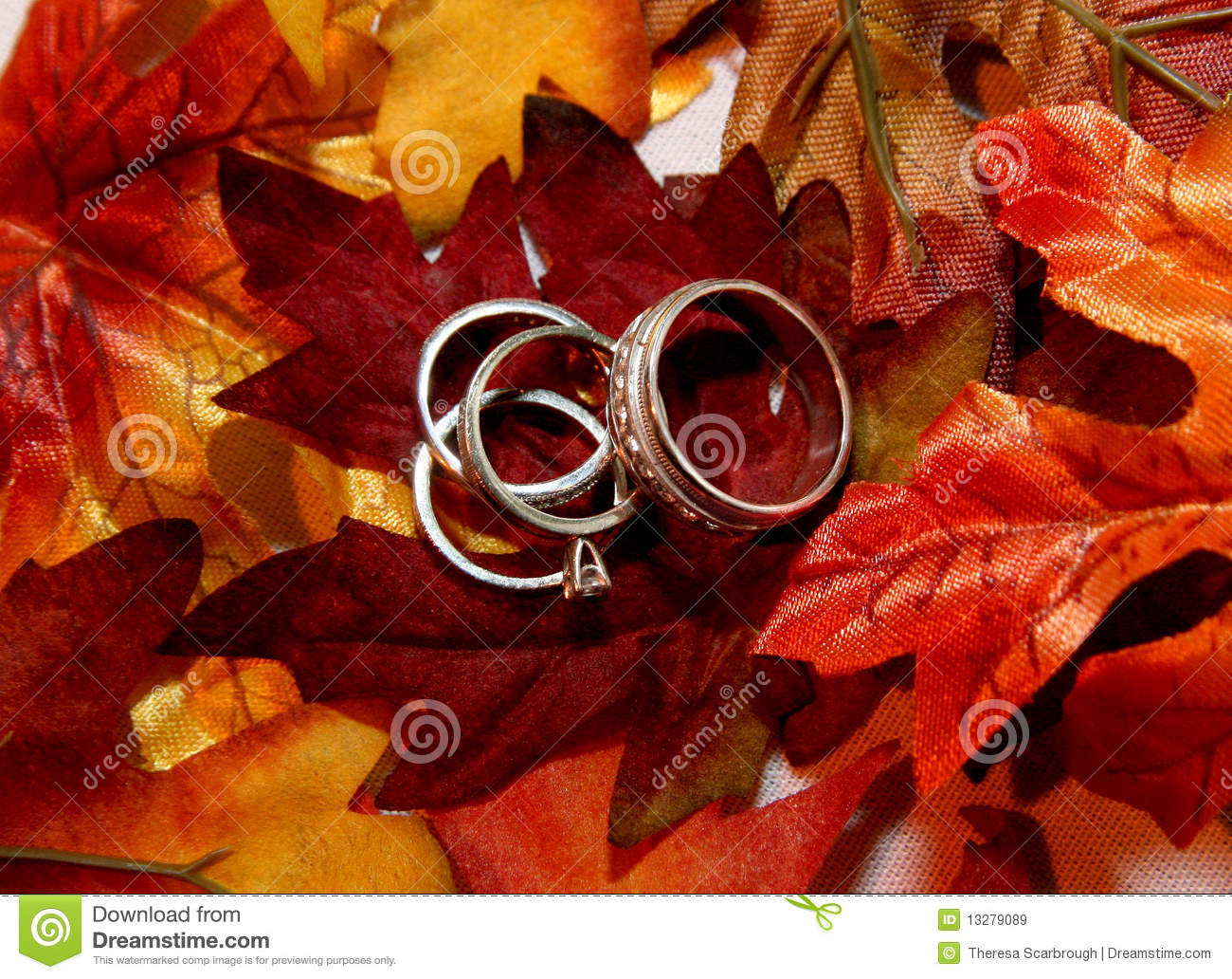 Wedding Rings On Fall Leaves Stock Image Image 13279089