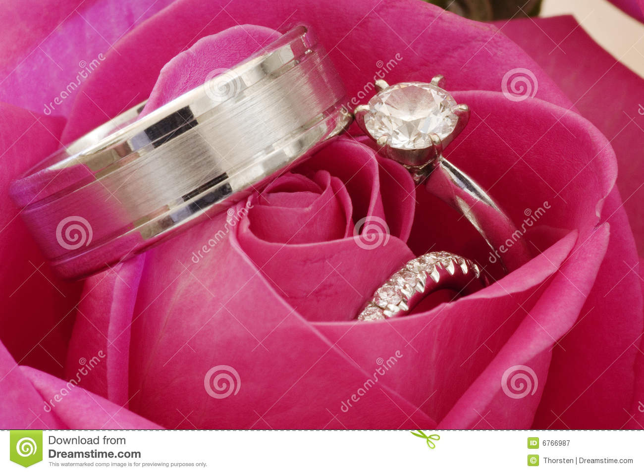 Wedding Rings In Red Rose Stock Image Image Of Symbol