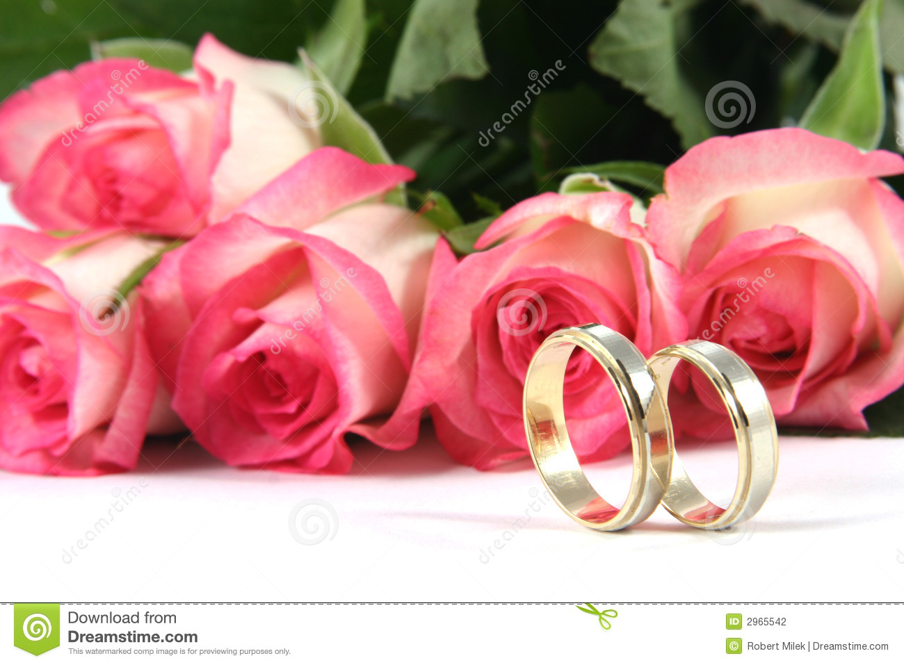 stock photography wedding rings roses image rose wedding ring Wedding rings and roses