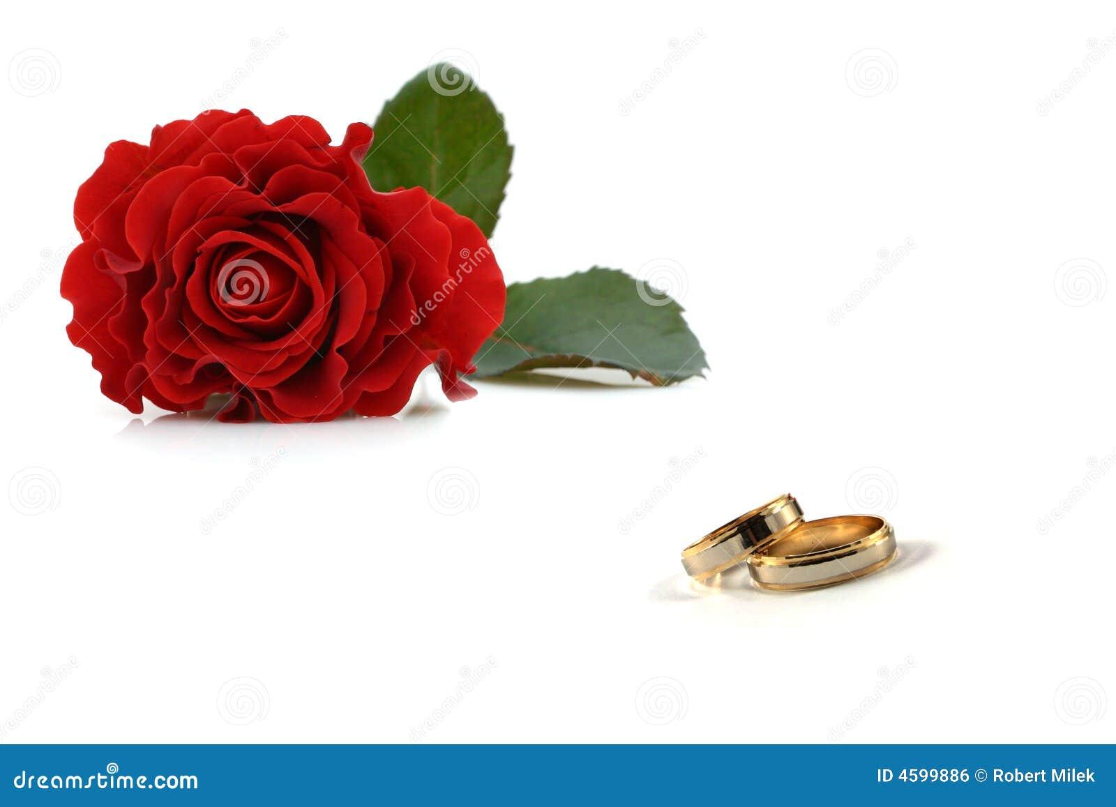 Wedding Rings And Roses Stock Photo Image Of Bridal Band