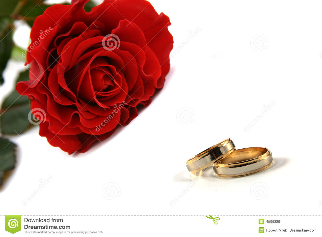 Wedding Rings And Roses Stock Image Image Of Reflection