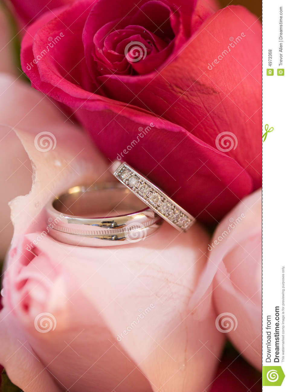 Wedding Rings in Roses