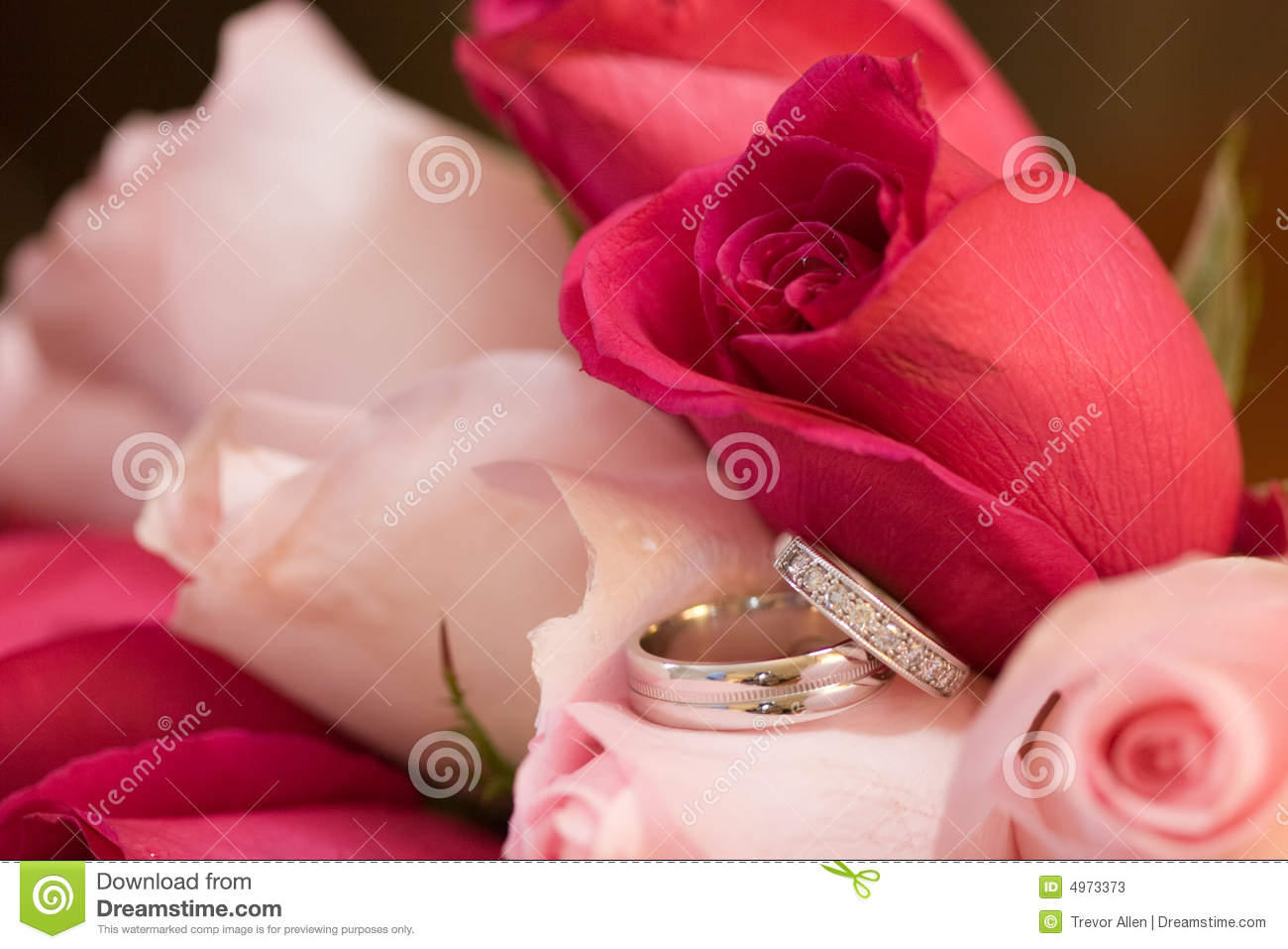 Wedding Rings in Roses stock image. Image of round, small - 4973373