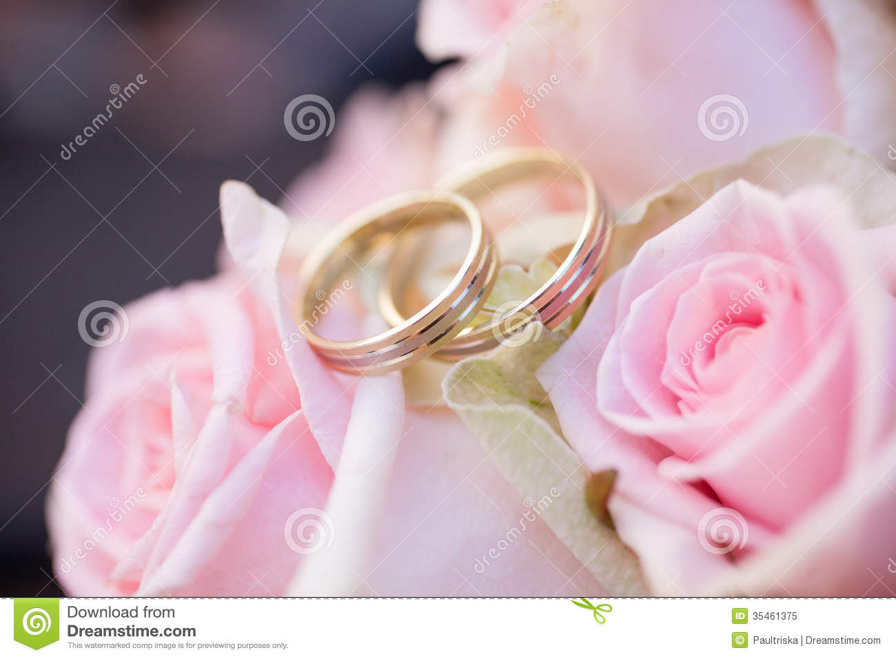 Wedding rings and roses stock image. Image of gold, event - 35461375