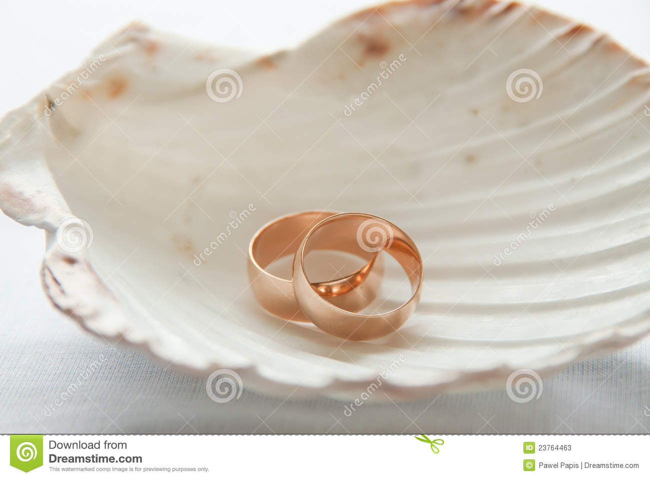 Wedding Rings In Seashell Stock Image Image Of Decoration. Assassins Creed Wedding Rings. Phantom Jewels Engagement Rings. Bee Rings. Rin Engagement Rings. Inscription Wedding Rings. 6 Stone Wedding Rings. Party Rings. Skyrim Engagement Rings