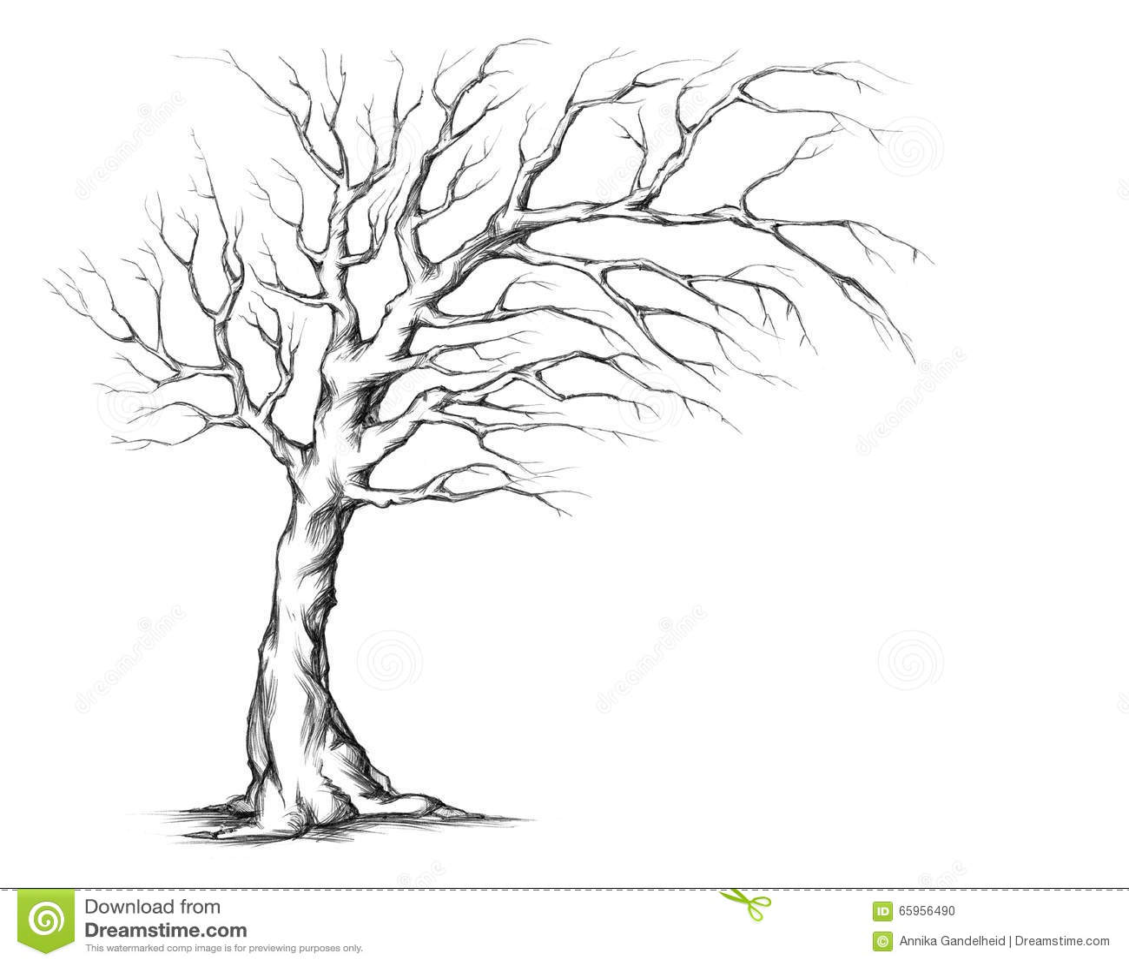 stock illustration wedding tree asymmetric crown illustration asymetric image wedding tree Wedding tree with asymmetric crown