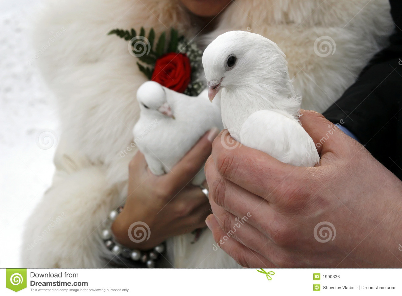 Wedding white pigeons stock photo image of marriage flower 1990836 wedding white pigeons biocorpaavc
