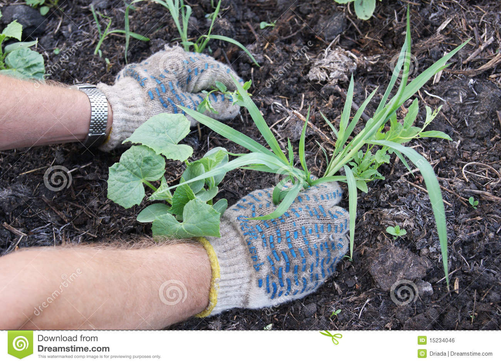 Weeding of weeds