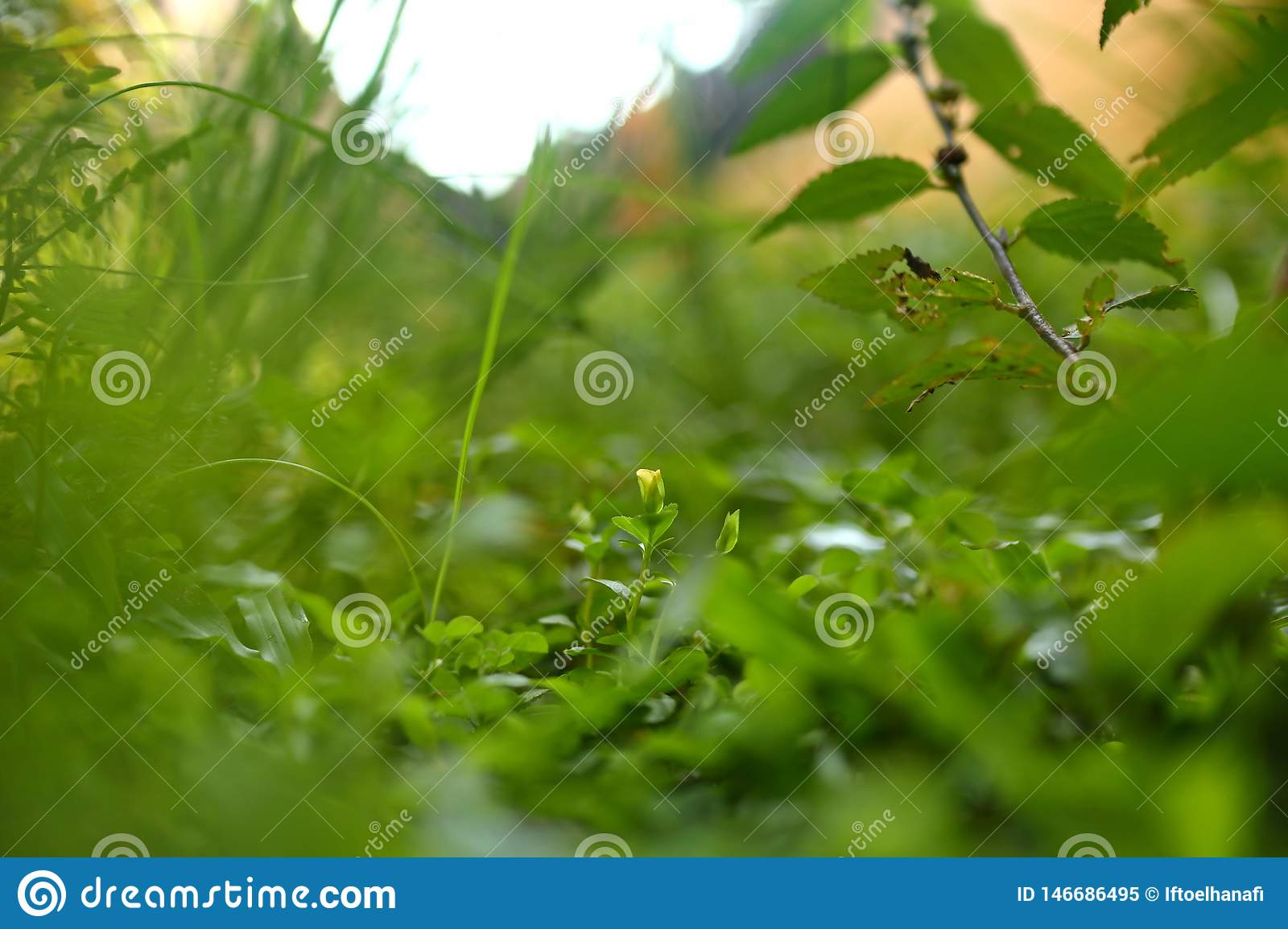 Weeds on the lawn, photographed with focus selection