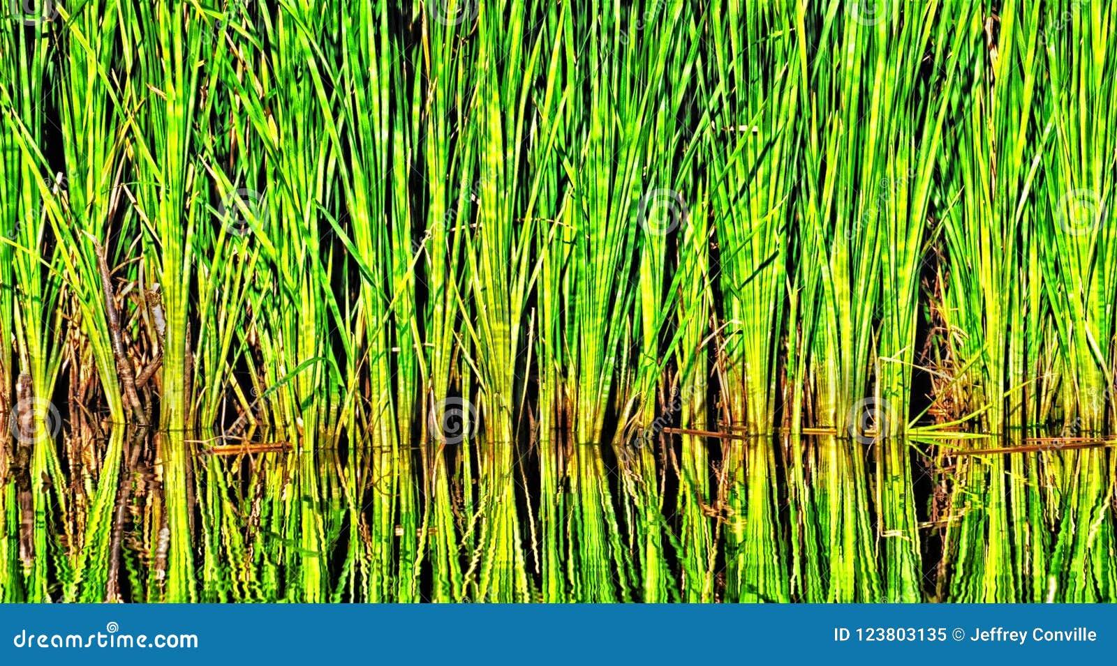 Weeds near a pond