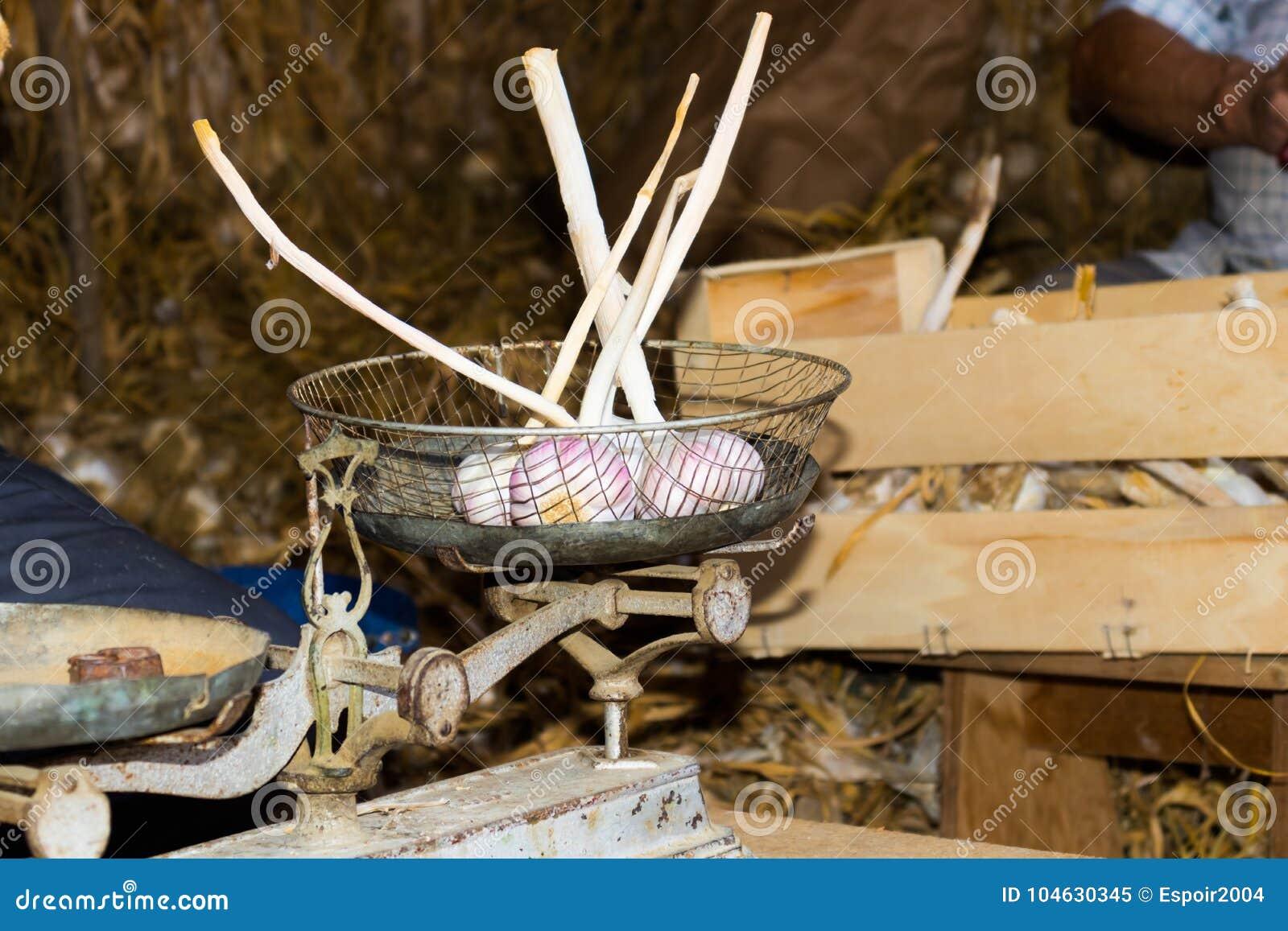 Download Weeg Knoflook In Oude Uitstekende Schalen Stock Afbeelding - Afbeelding bestaande uit aromatisch, naughty: 104630345