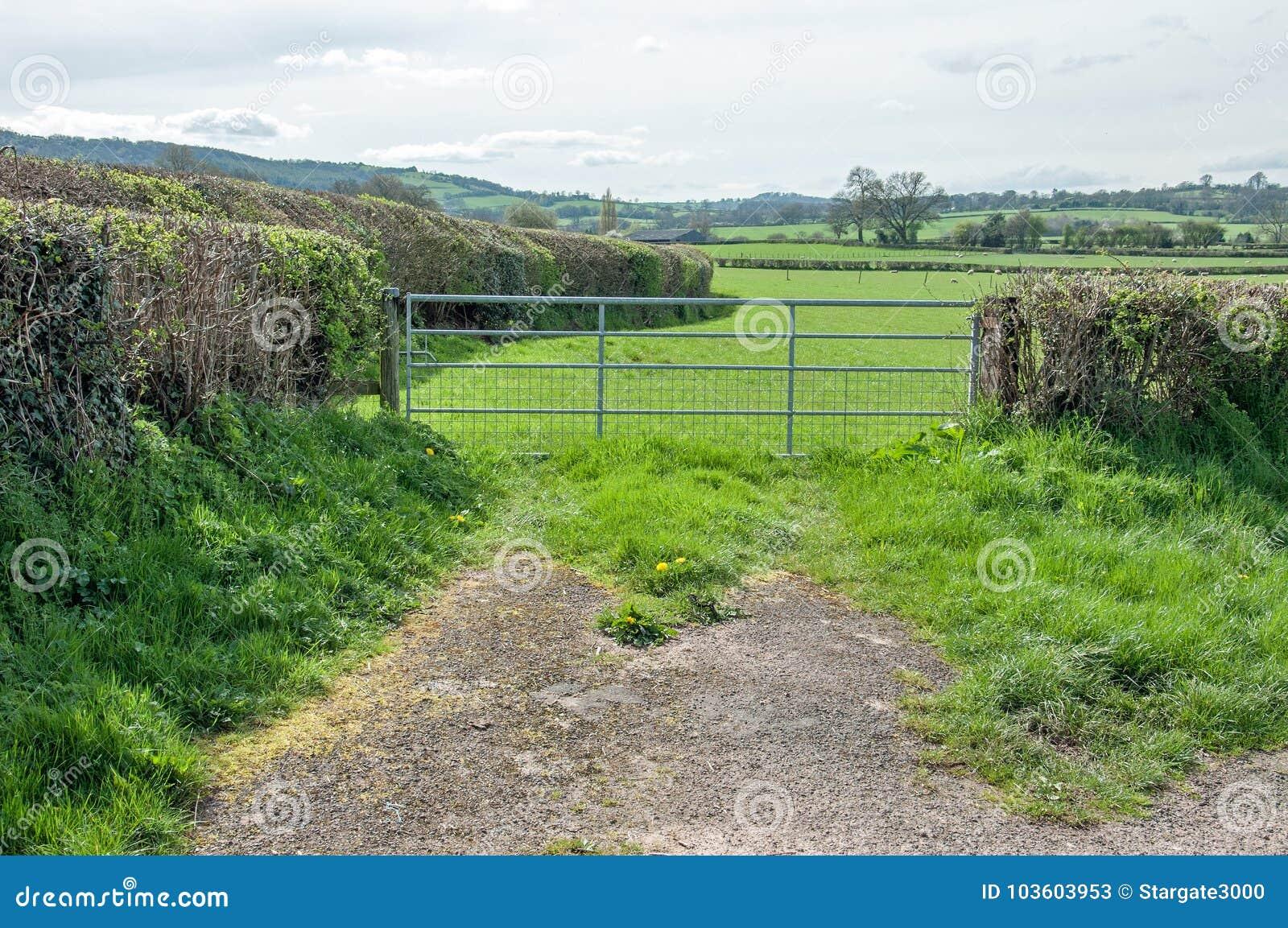 Weelderig zomerlandschap in het Engelse platteland