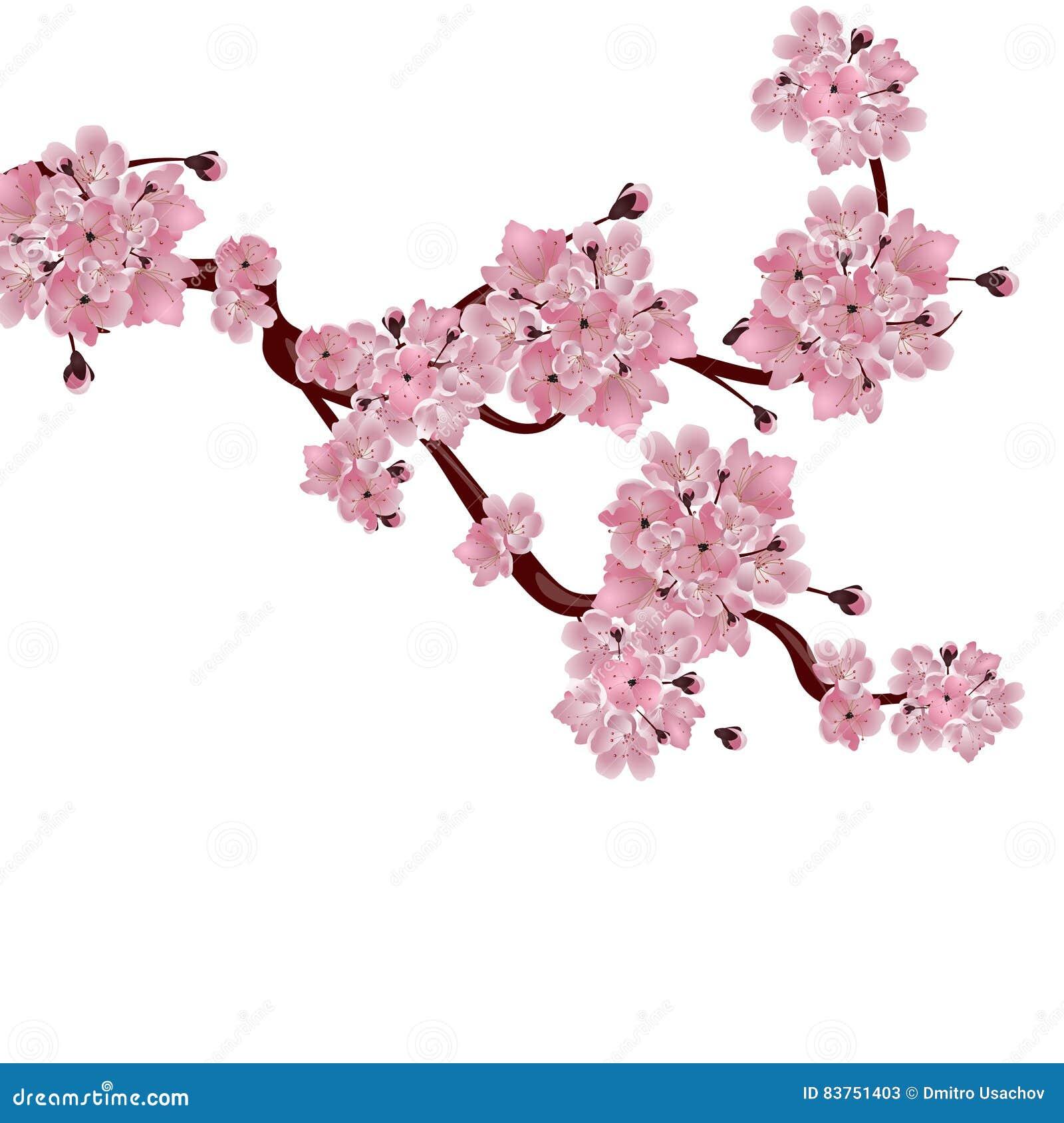 weelderige japanse kersenboom de tak van roze kersenbloesem vector illustratie illustratie. Black Bedroom Furniture Sets. Home Design Ideas