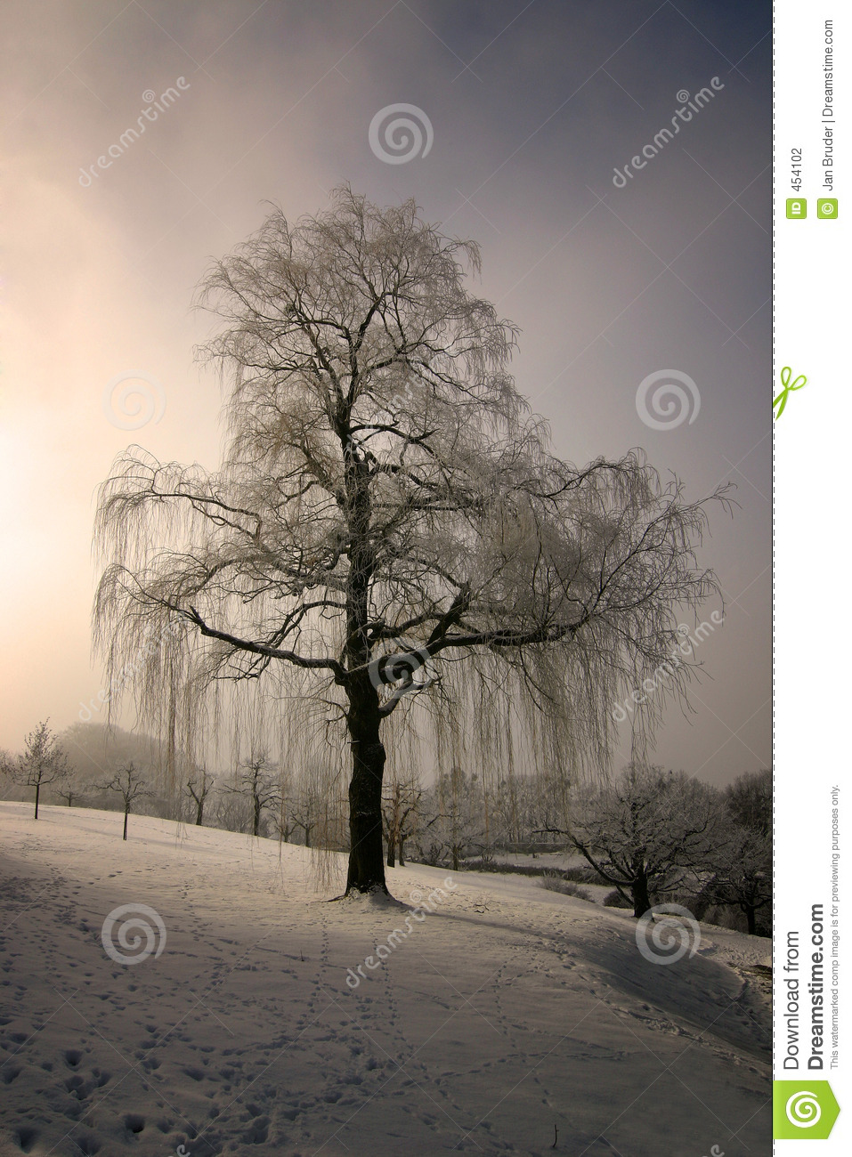 Download Weeping Willow 1 stock photo. Image of melancholic, unhappy - 454102