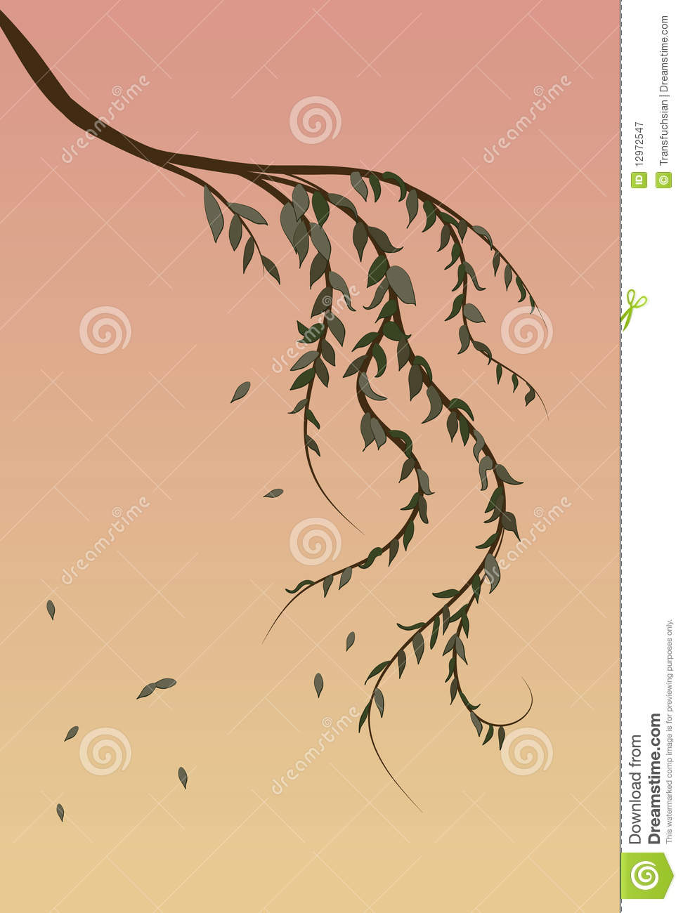 Weeping Willow Tree Branch Background Royalty Free Stock Photography ...