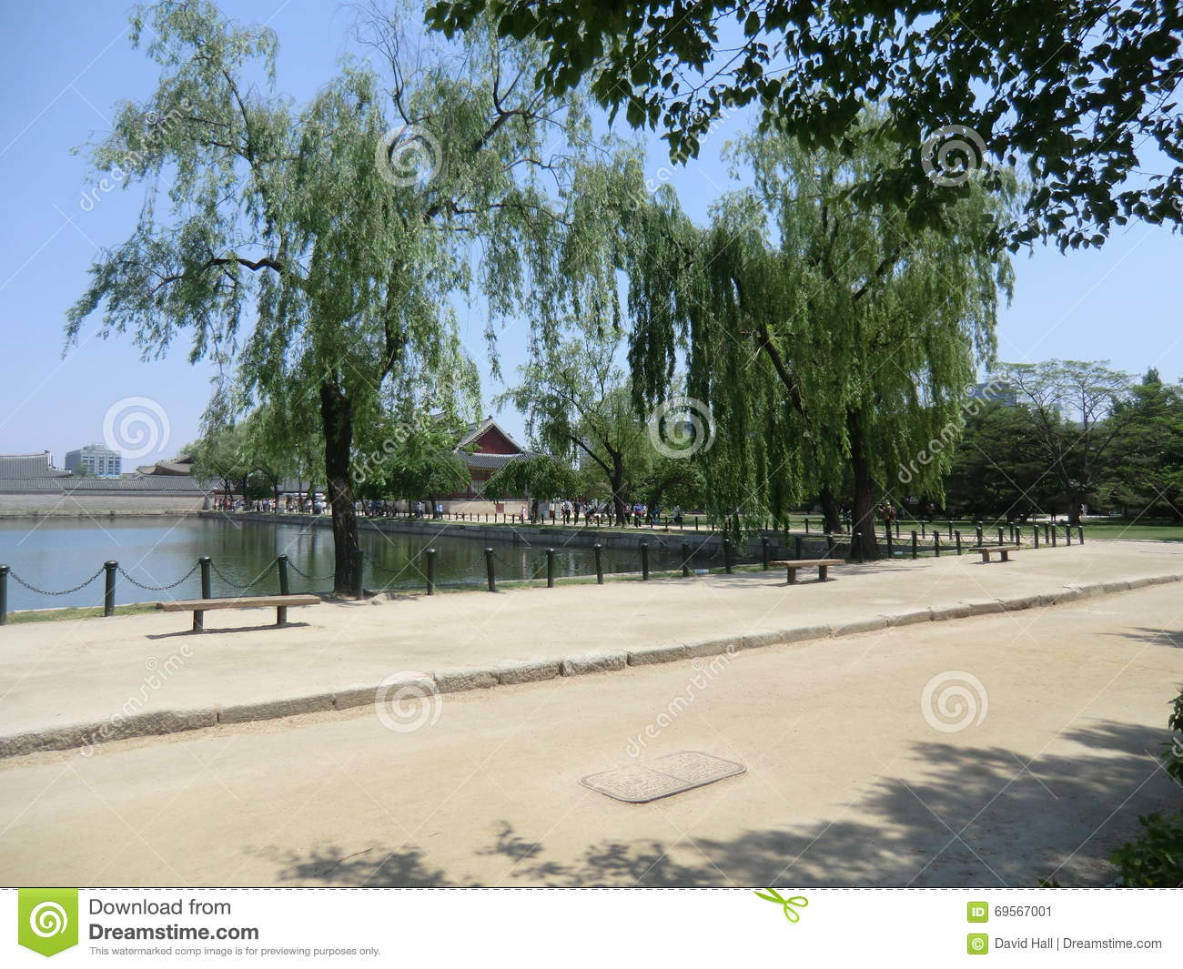 Weeping Willow Trees On The Edge Of A Lake In Seoul, South Korea