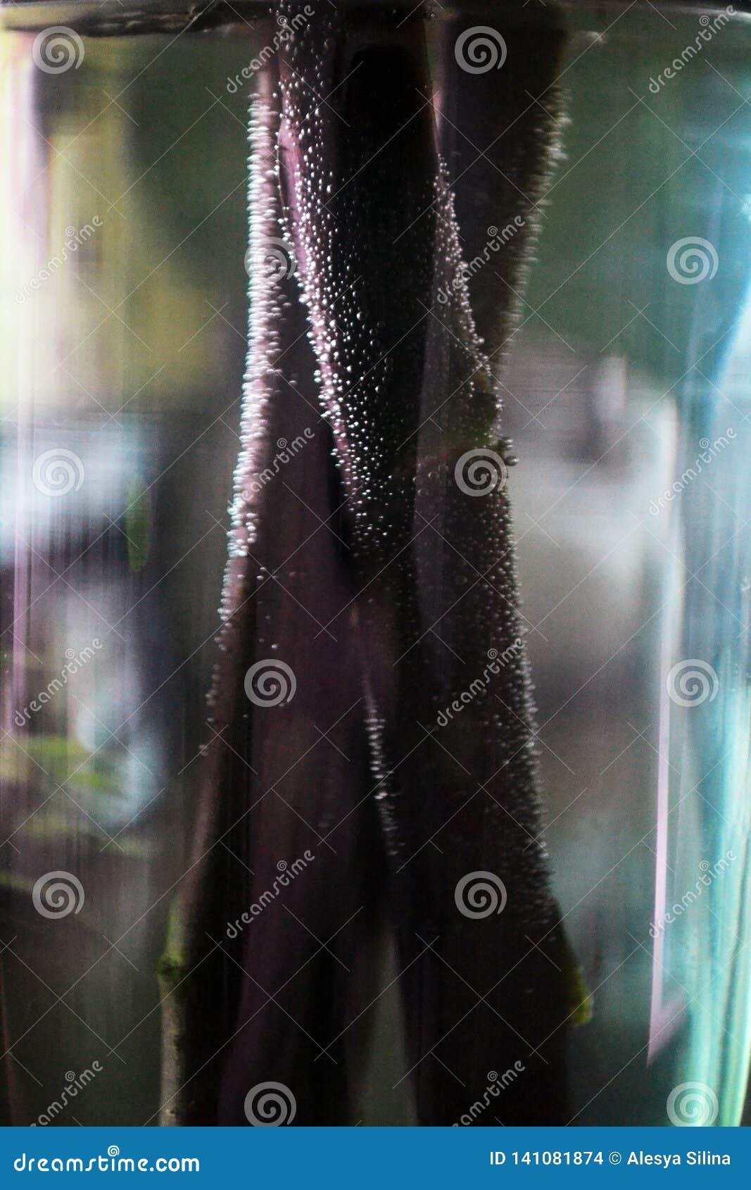 Weergeven op de groene die bloemstelen met waterbellen worden behandeld
