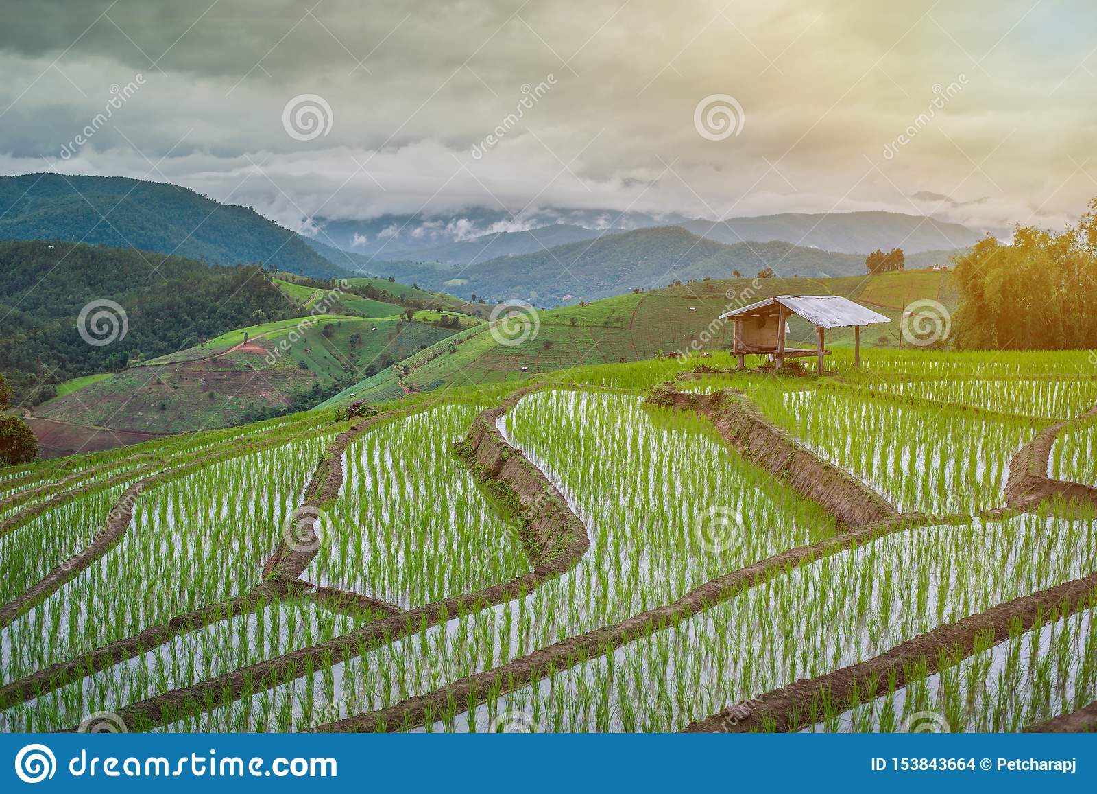 Weergeven Terrasvormig Paddy Field in mae-Jam Dorp, Chaingmai,