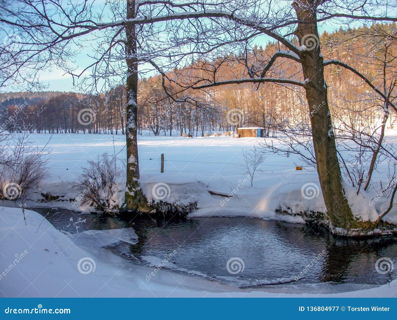 Weergeven van een de winterlandschap in het Thuringian-Bos