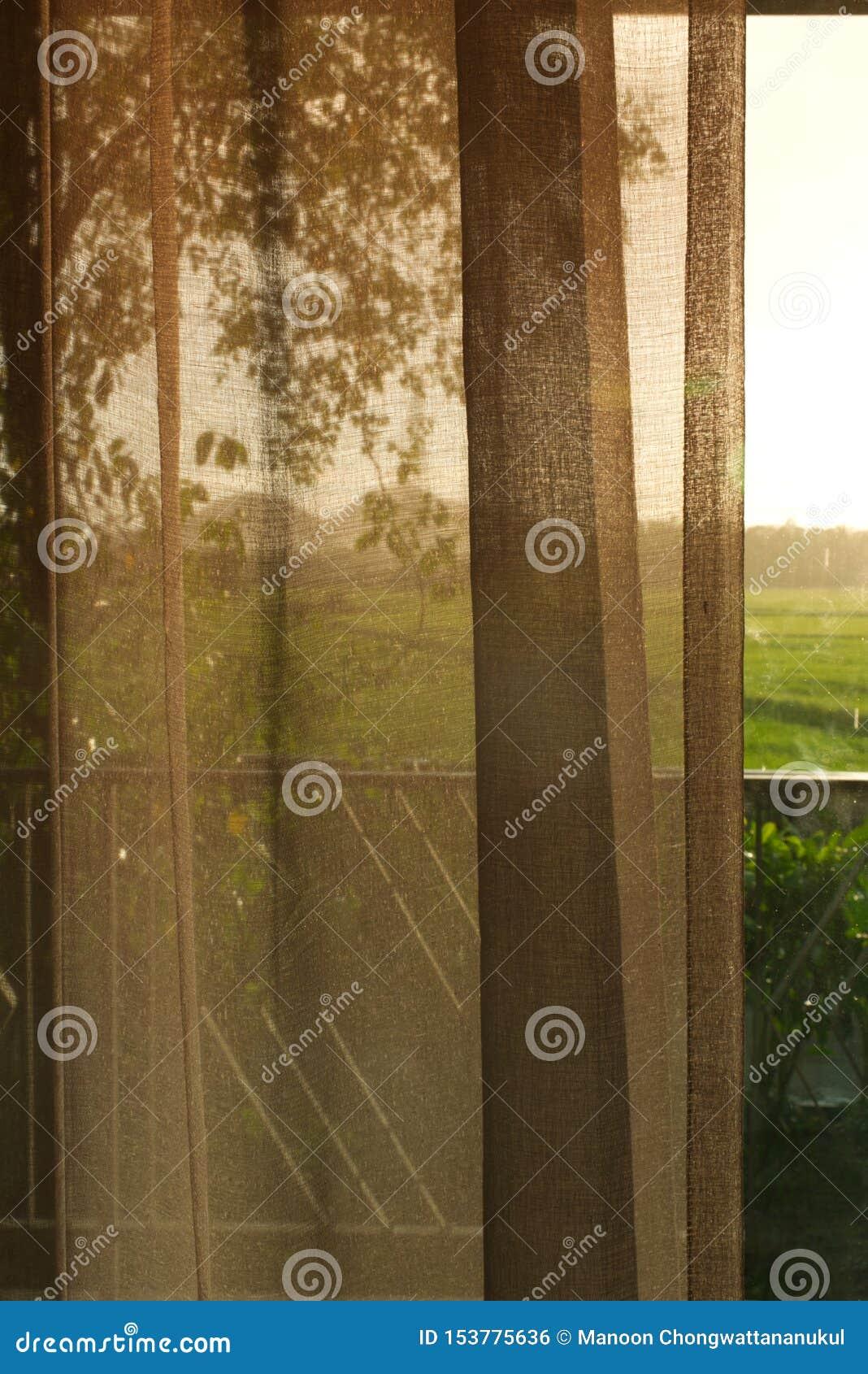 Weergeven van een ruimte die aan padieveld kijken
