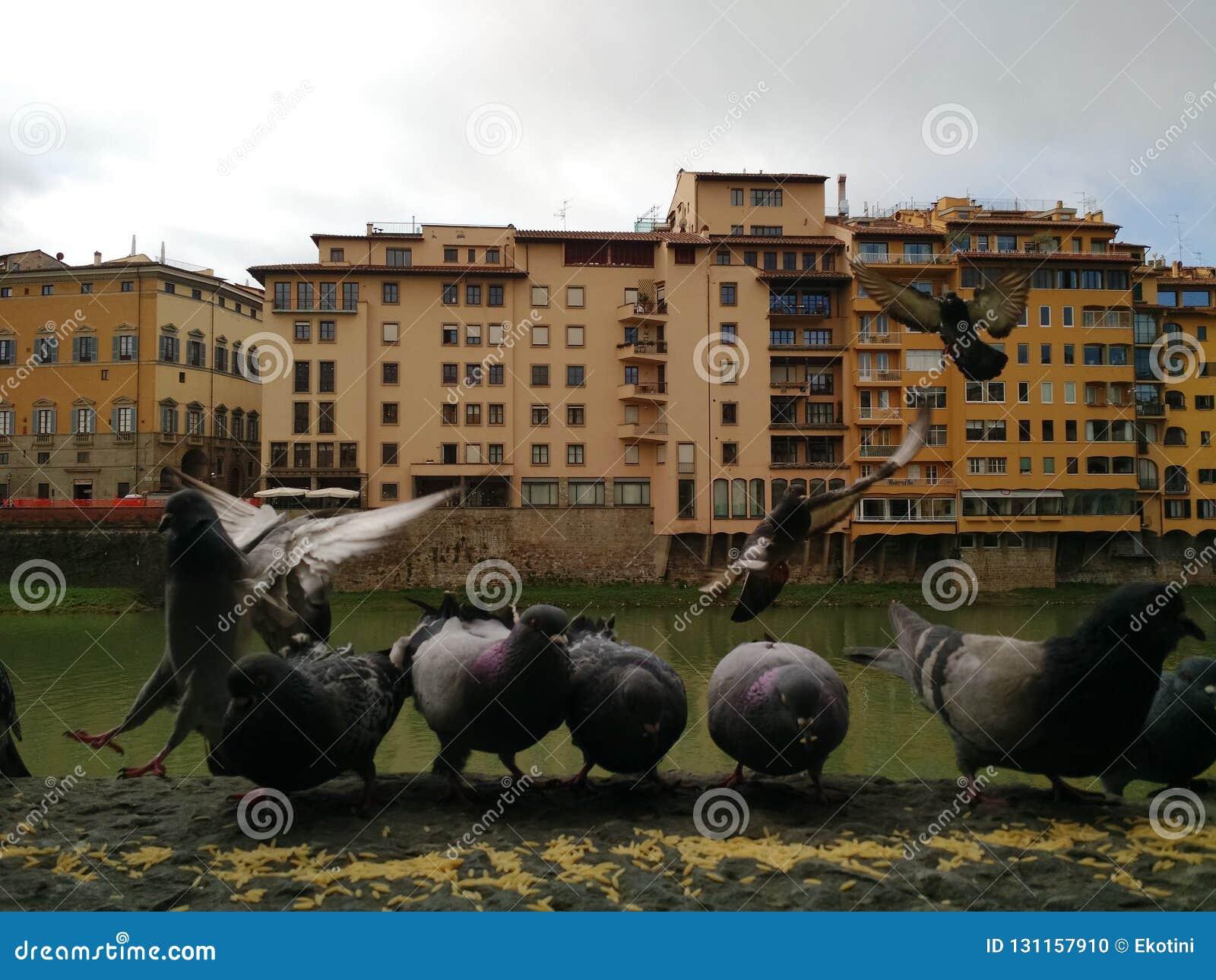 Weergeven van Rivier Arno met duiven in de voorgrond, Florence, Italië