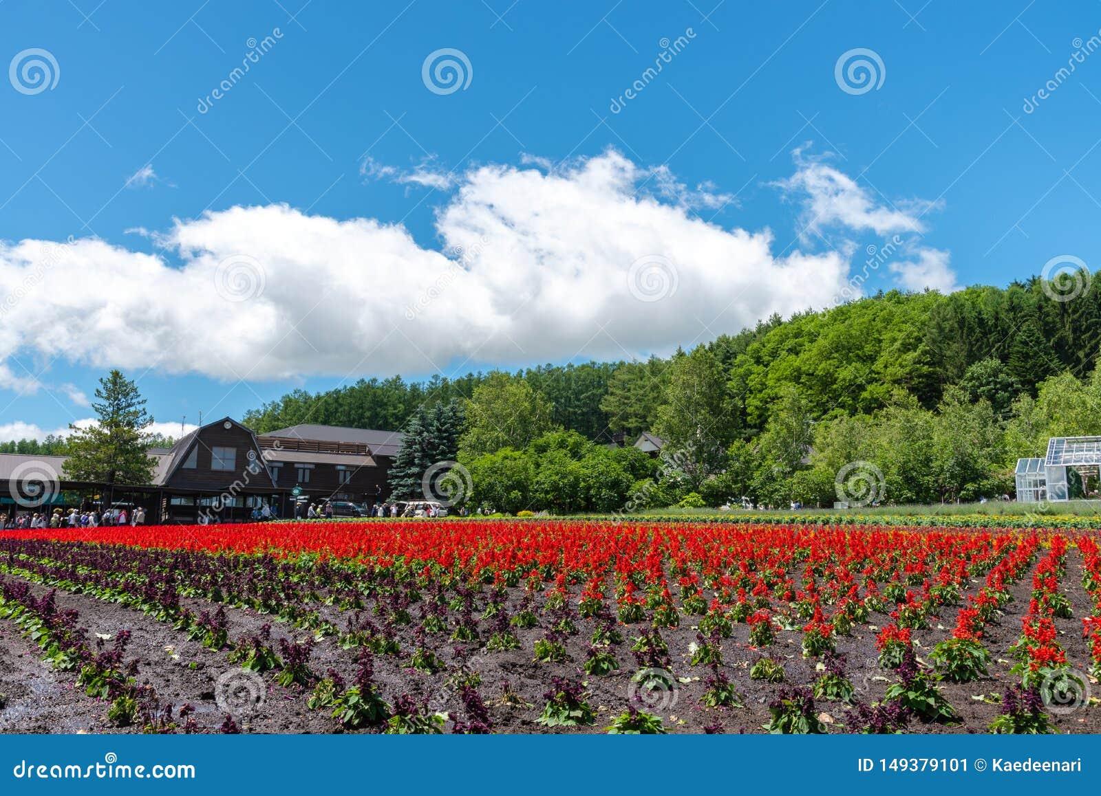 Weergeven van volledige bloei kleurrijk veelvoudig soort bloemen