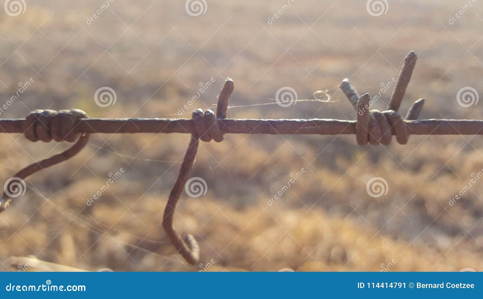 Weerhaakdraad tussen twee landbouwbedrijven in Zuid-Afrika