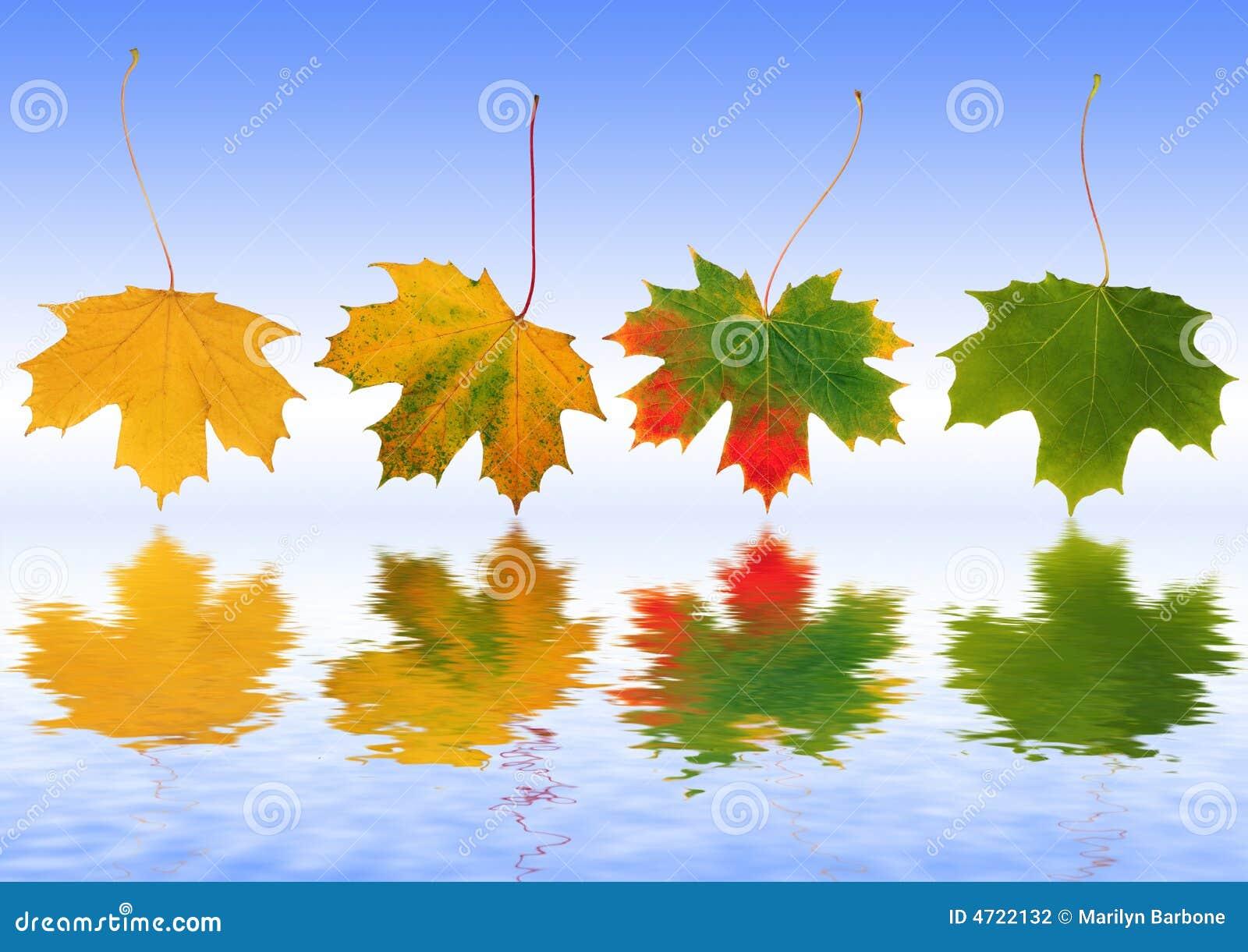 Weerspiegelde de Bladeren van de herfst