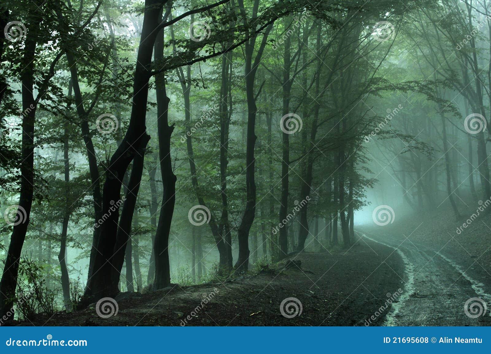 Weg in bos op mistige dag