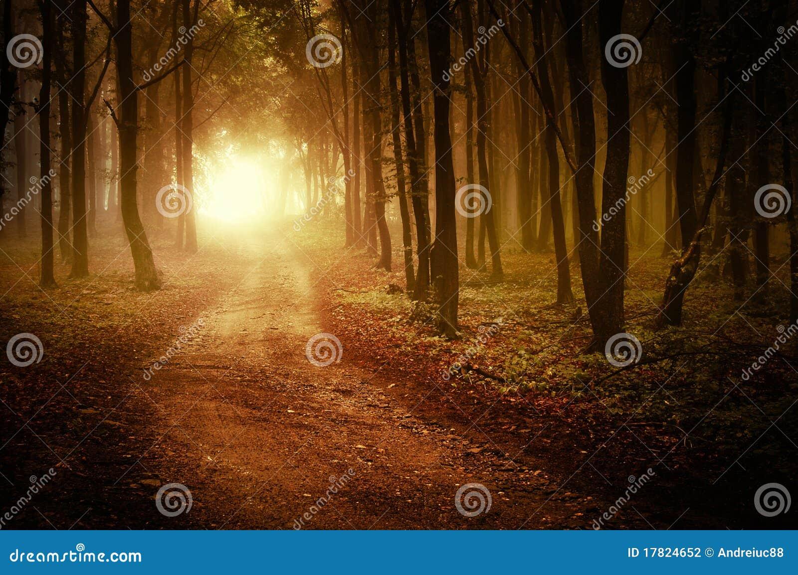 Weg door een gouden bos bij de herfst