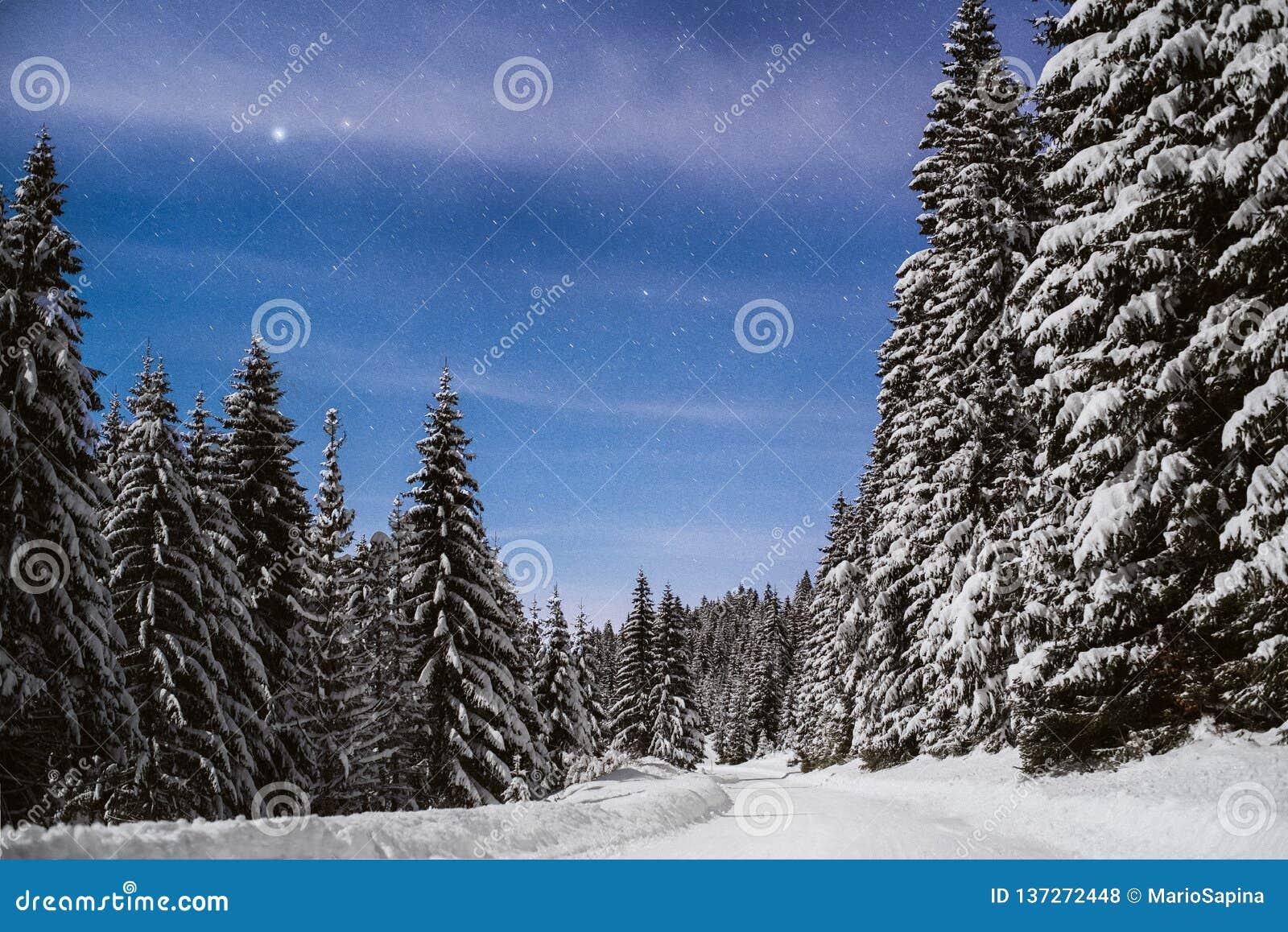 Weg door een sneeuwberg met pijnbomen